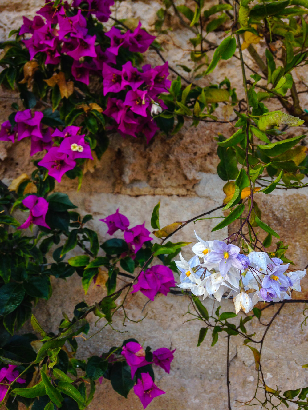 Flowers, flowers everywhere, Masseria Torre Maizza