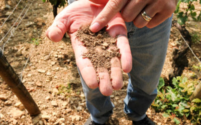 Terroir (and Embarrassment) in the Climats of Chablis