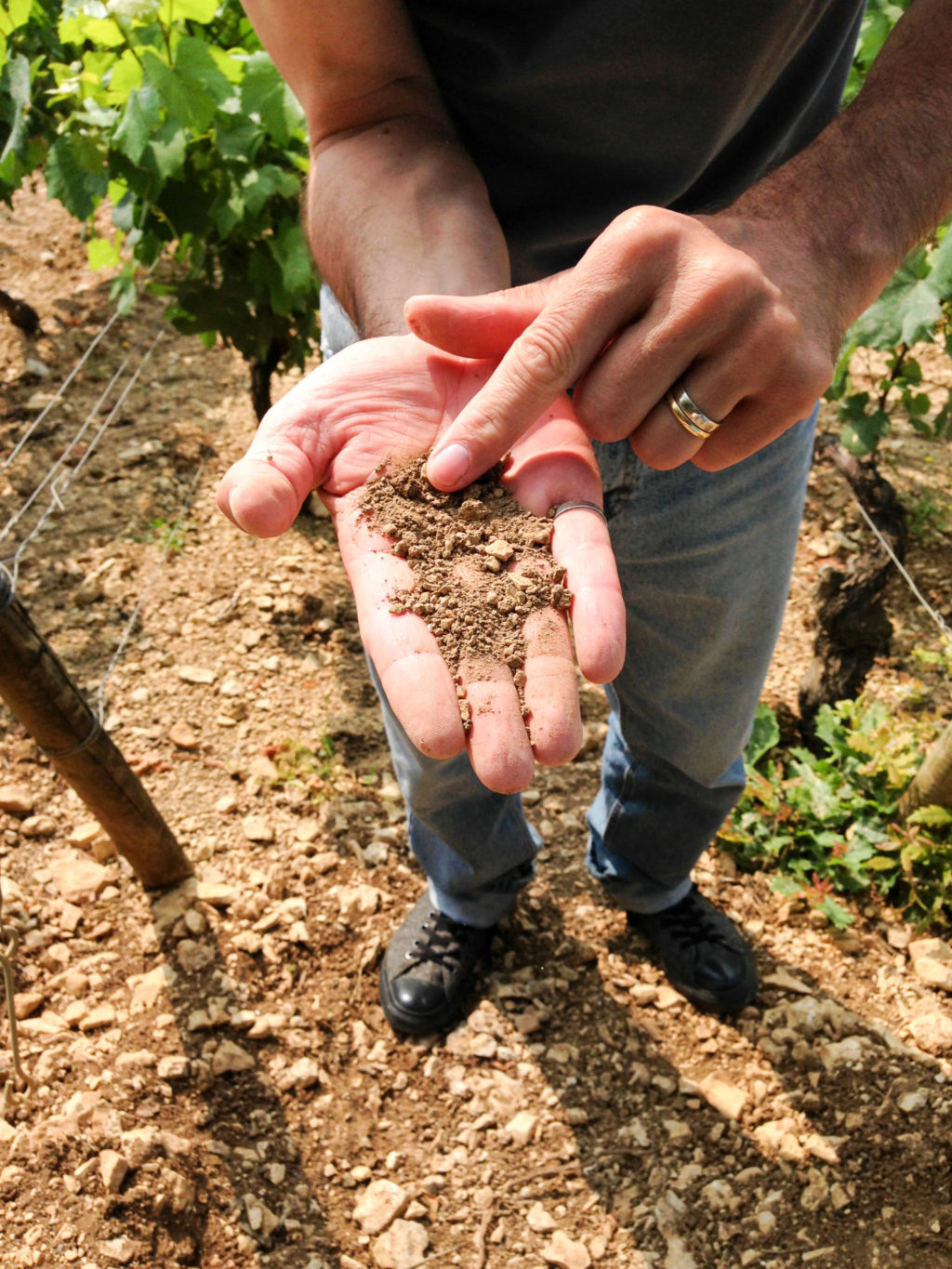 It's all about the soils in Chablis, France. Photo by Gloria J. Chang.