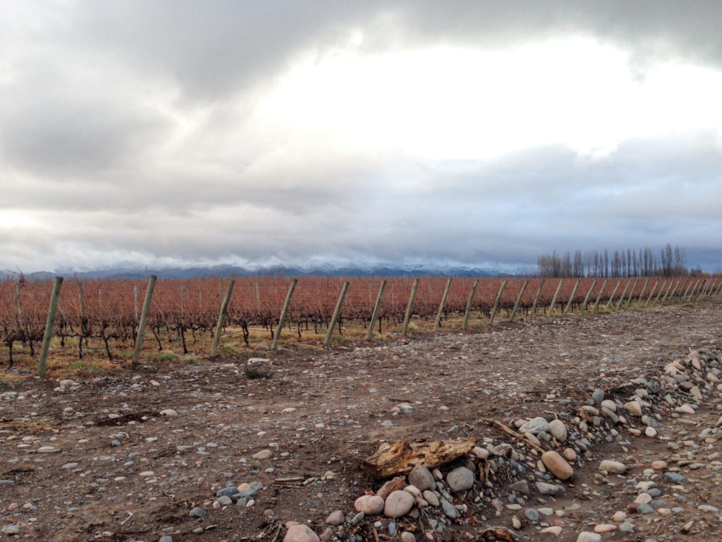 Vineyard in fall at Bodegas Salentein in the Uco Vally, Mendoza, Argentina. Photo by Gloria J. Chang.